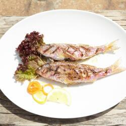 Aeyialos Seafood Restaurant Fresh Red Mullet