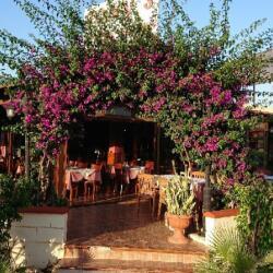 Tonys Cyprus Tavern